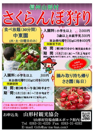 H29さくらんぼポスター,-001.jpg
